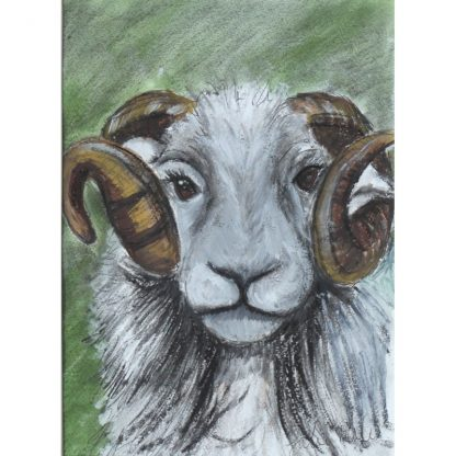 Beatie the Sheep greetings card