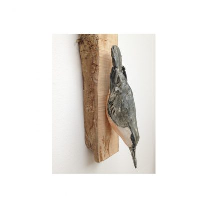 Neville the Nuthatch