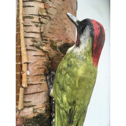 Woody the Green Woodpecker