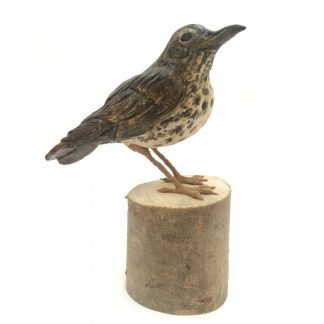 Skye the Song Thrush