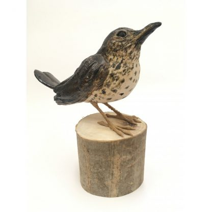 Harris the Song Thrush